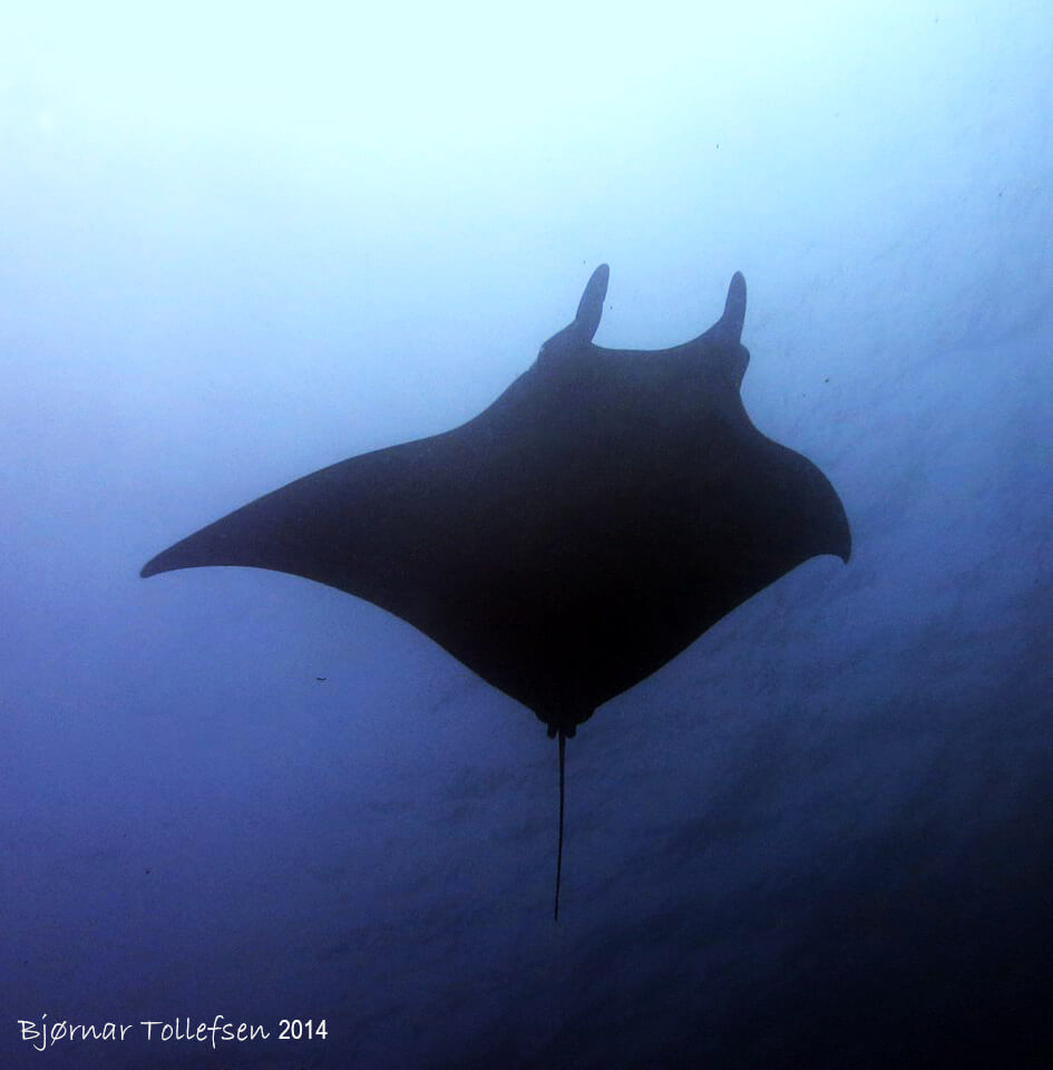 Dive Similan Islands Thailand - Manta Ray