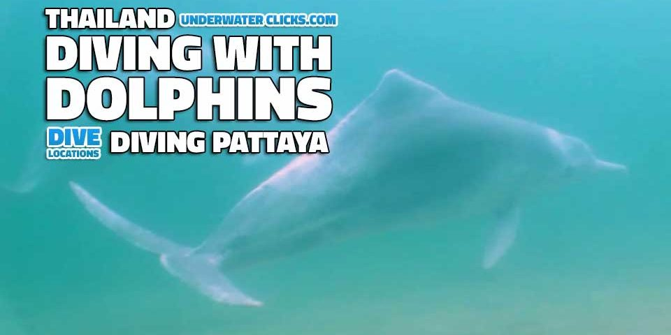 scuba diving location - Dolphins diving in Pattaya Thailand