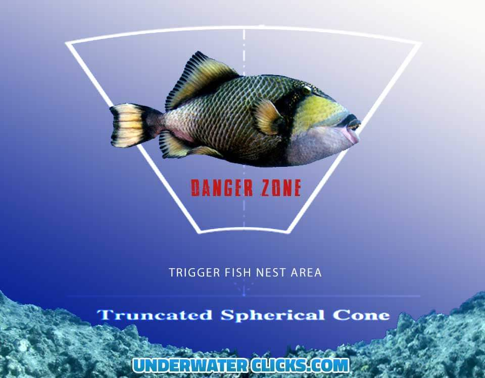 Top 10 Triggerfish Tips - Danger Zone