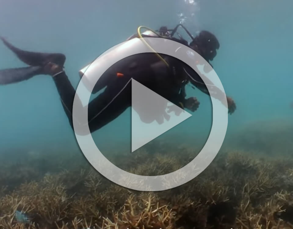 ocean quest save coral reefs video