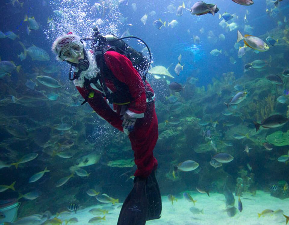 #6 Top 10 Christmas Divers