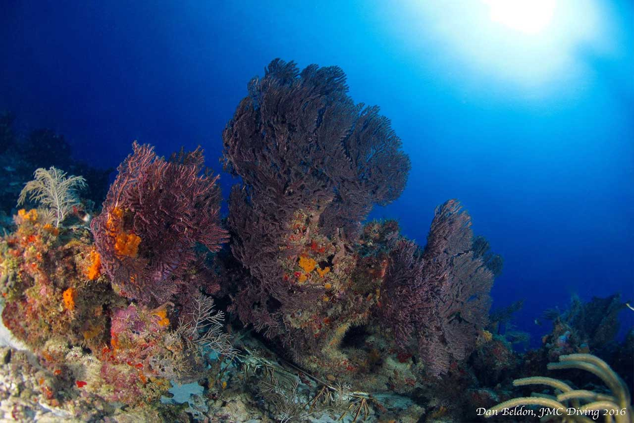 Stunning coral reef JMC DIving