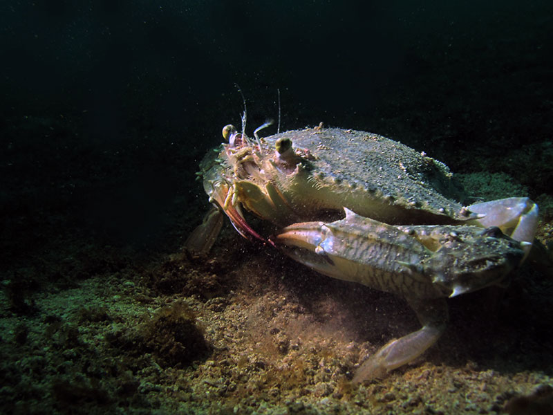 Macro photography crab top lighting