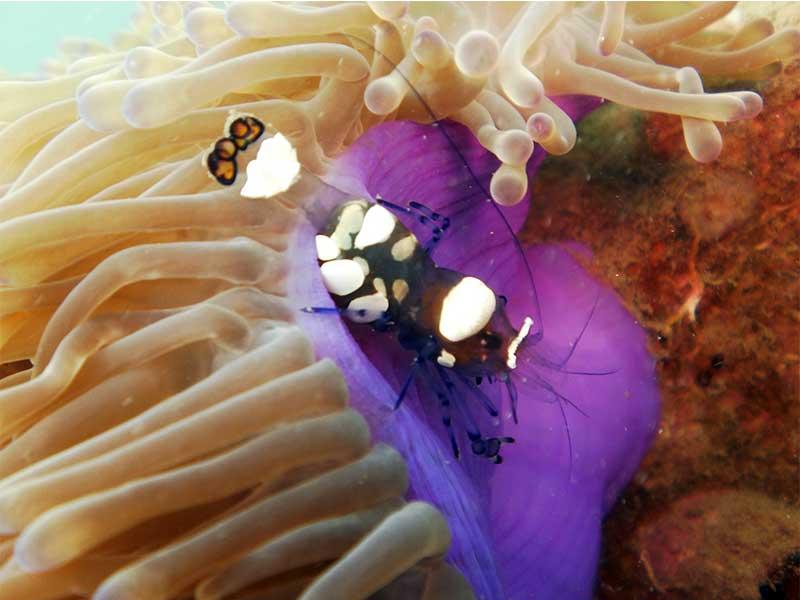 Macro photography shrimp get low and close.. then closer!