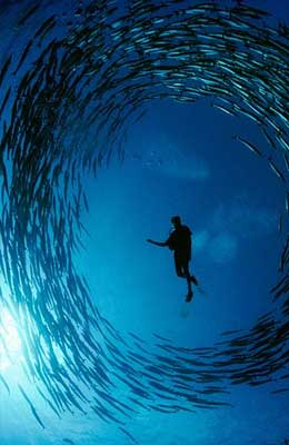 underwater silhouette photography Diver-fish-ball
