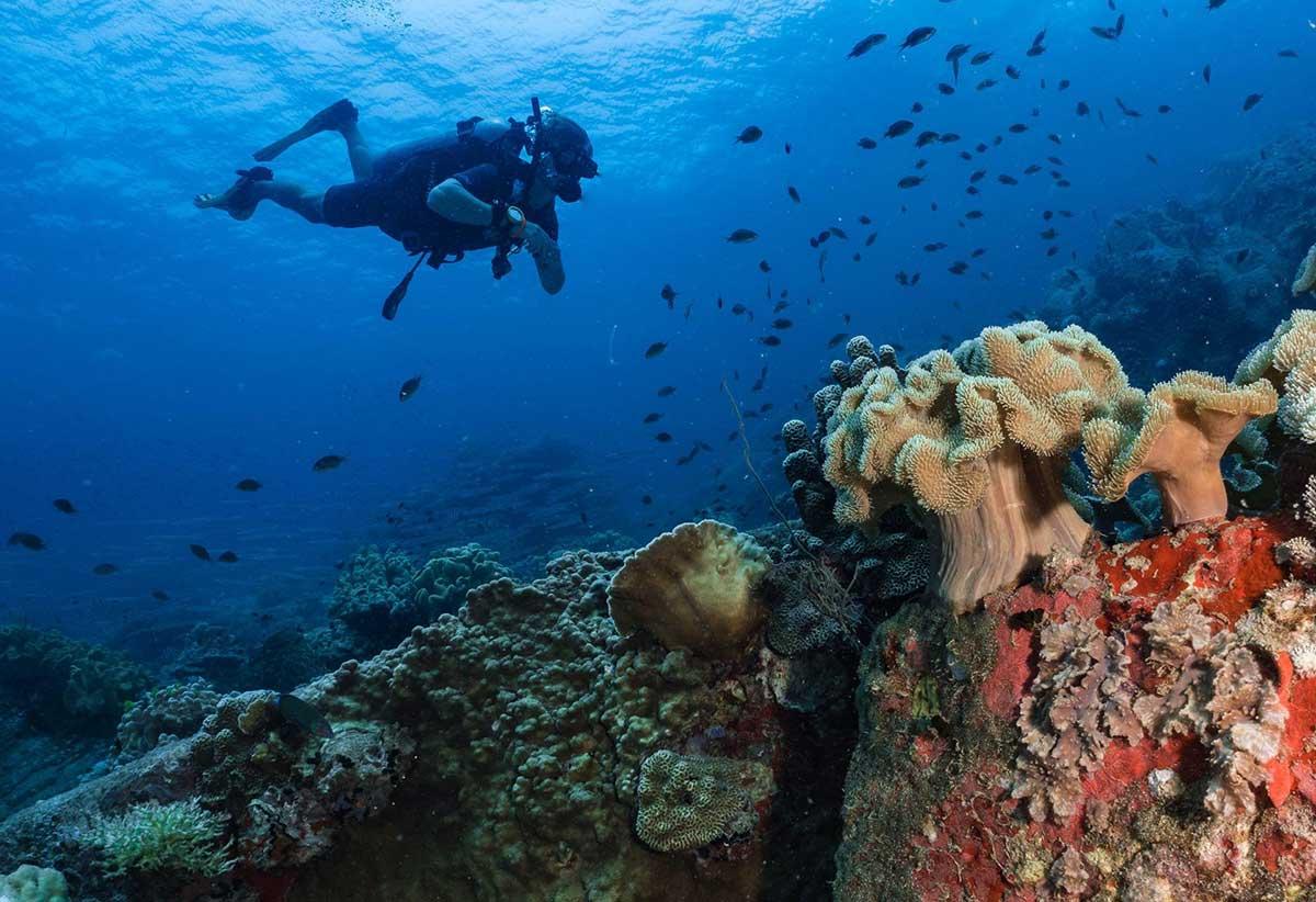 Underwater clicks diving koh tao guide - Dive in koh tao ...