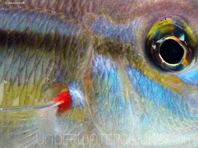 Top 10 Macro Tips - Abstract Fishy