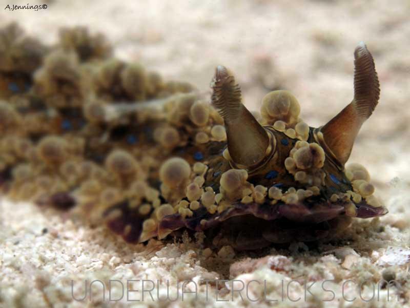 Top 10 Macro Tips Photos - Nudibranch boke blurr