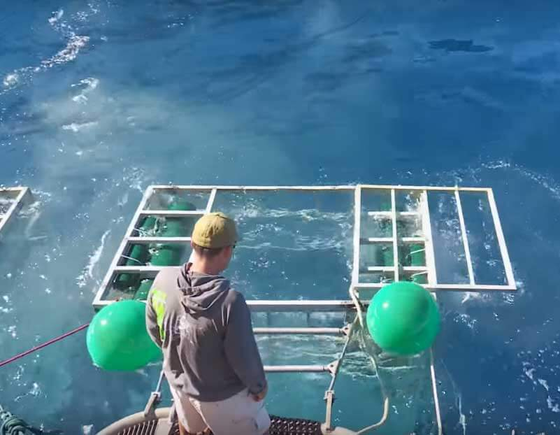Staring At Empty Cage After Sharks Escapes.. But Where's The Diver?